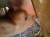 4820681109_9e1d434a59_t