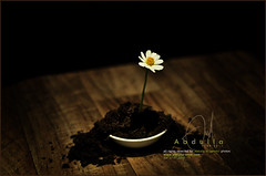 #12 Growing every day with a drop of love photo by Abdulla Attamimi Photos [@AbdullaAmm]