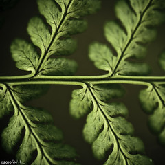 The Order of Nature - Fractals photo by David Hannah