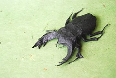 Stag Beetle photo by blue paper
