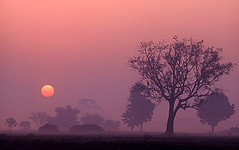 Tarai Sunrise photo by ashishkoirala