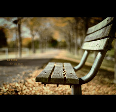 Autumn: Sit and Enjoy photo by mariosworld343