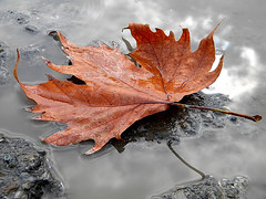 Autunno     [Explore, Front Page Oct.17.2010] photo by pierluigi maria