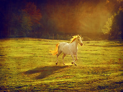 White Horse with the Fire Mane photo by Ekler