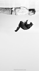 Cat Falling photo by Photo Extremist