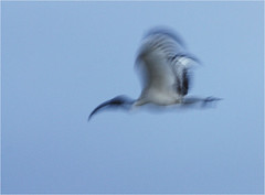 Avian abstract 0226 photo by Brian Preen