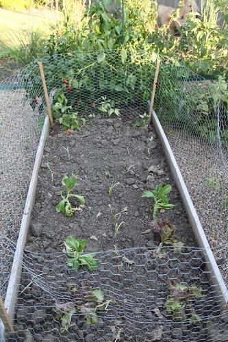 Garden '10 round 2