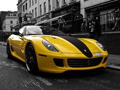 Yellow. photo by QusaiNusair