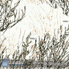 WTP-247 Prairie Ghost-Snow Ghost