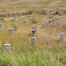 Little Bighorn Battlefield National Monument - The Last Stand Hill.