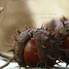 fall treasures by ~ania♥