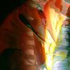 5071140469_9ccb0f93ed_t