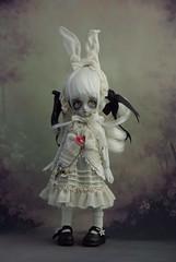 White Rabbit photo by dd-anne