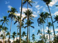 Coconut Trees photo by FlipMode79