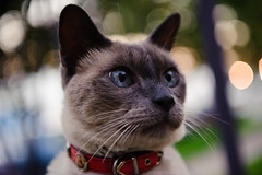 Bokeh Cat ( for Caturday ) photo by -william