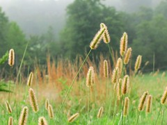 Grass in the Morning photo by Universal Pops (David)