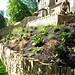 Garden Done IX