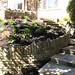 Garden Done III