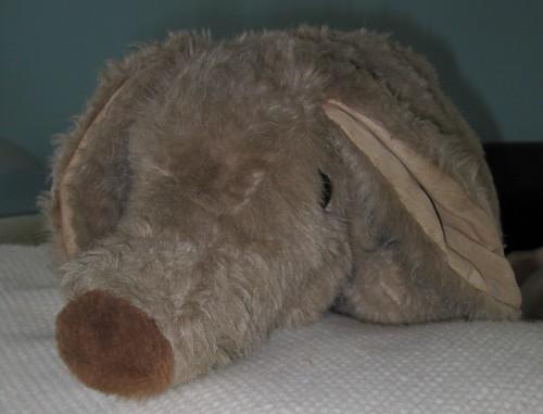 Well Grounded Aardvark