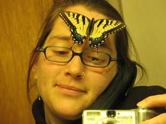 foreheadswallowtail