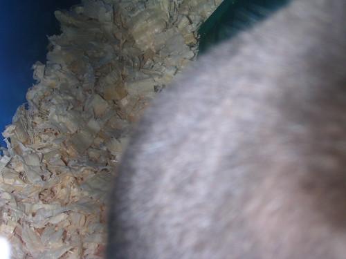 Valentina's Fur