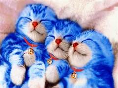 doraemon kittens