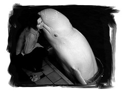 Whisper of The White Whale photo by Julia A