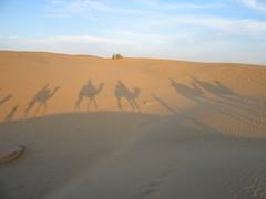 CamelGroupShadow