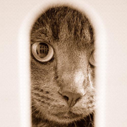 Le chat en cage...