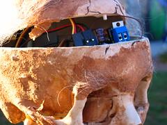 Animatronic skull circuitry