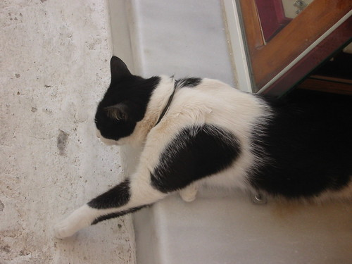 Resting kitty on marble stoop