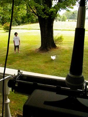 Tim, Bird, Lawn
