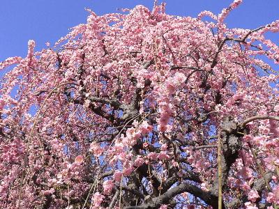 梅花开了  - 丹丹 - 幸福花儿开。。。