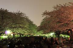 日本有数の花見会場