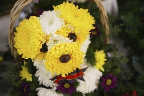 yellow white flower dog