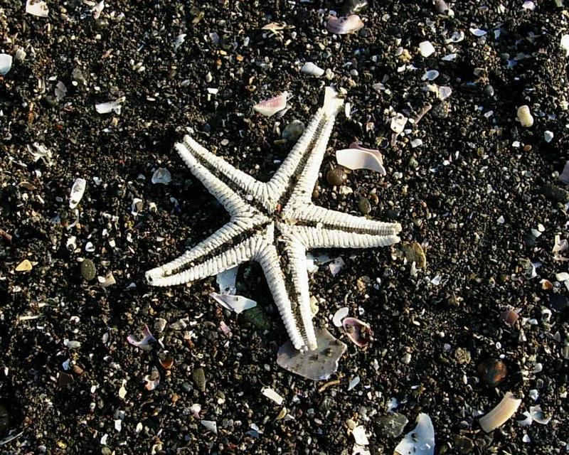 Sea star, star sea