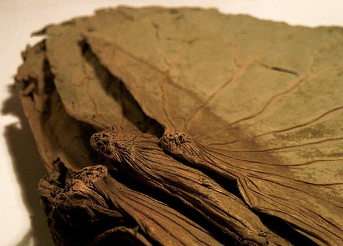 Dried Lotus Leaves