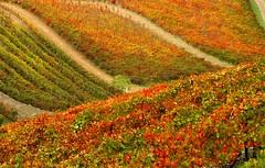 Autumn photo by PauloSantos