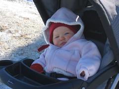 Leda, a little bored at the tree huntin'!