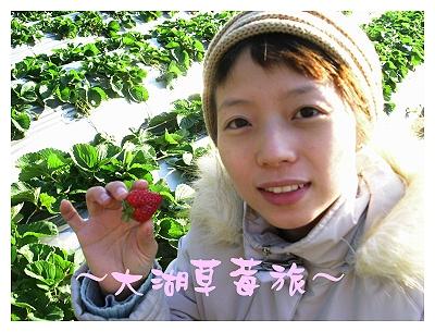 大湖草莓旅