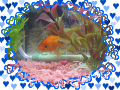 fish love 2