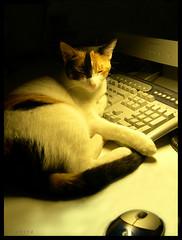 gato durmiendo al lado de un ordenador