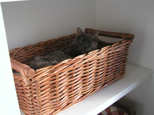 Basket Kitty 007