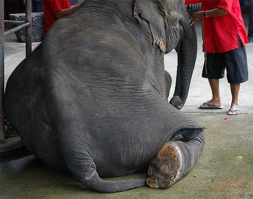 sitting elephant PENTAX *istD Thailand