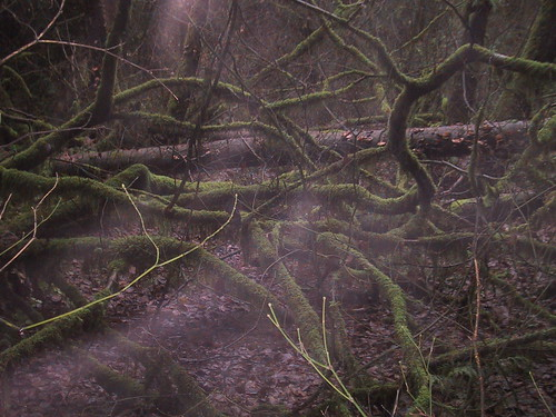 Misty Moss