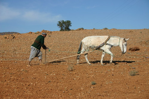 Another working day in the field. Tiznit-Tafraoute-road, december 2005.