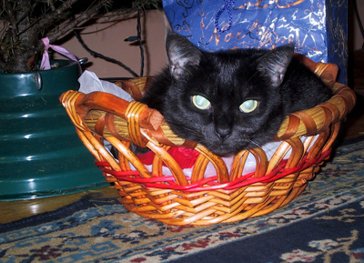 basketcatblog