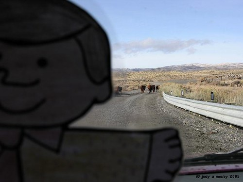 Flat Bobby did a good job, now we can pass the cows.