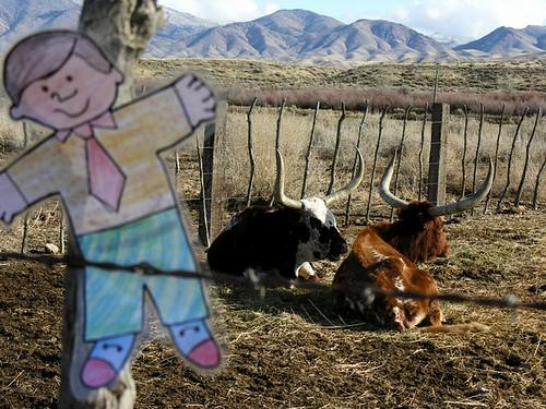 Flat Bobby visits the Watusi Girls at the Duncan Ranch