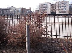 Axed Tree